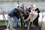Planting the Tree